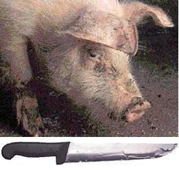 Matámolo porco