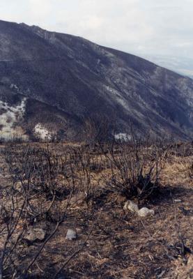 El monte muradano mejora su aspecto