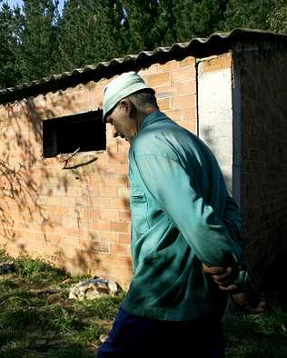 Roban 40 cerdos y los sacan por dos ventanas de una granja de Lugo
