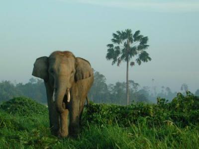 Serres - Illa de Sumatra (13-1)